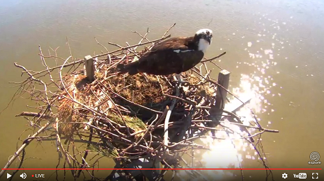 Live camera at Chesapeake Conservancy