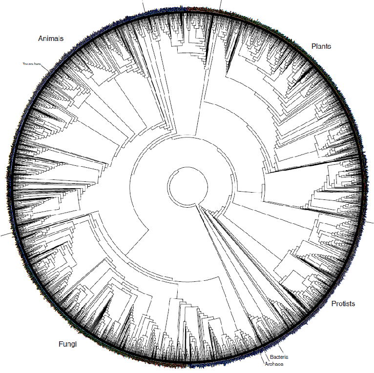phylogeny and the  u0026quot tree of life u0026quot  part 2