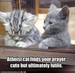 Religious and Atheist cats