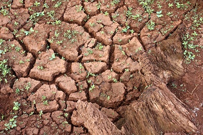 Drought causing cracked earth