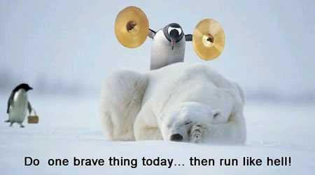 Penguin, polar bear and bravery